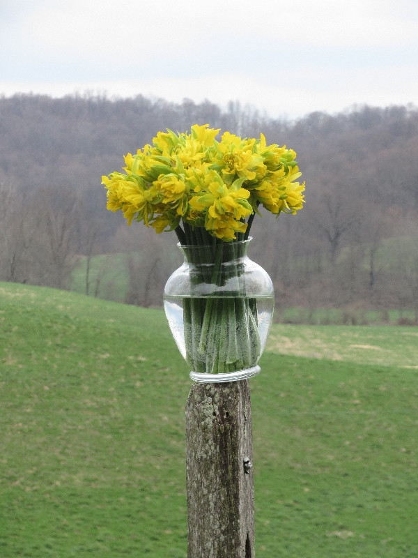 HERITAGE DAFFODILS: THAT WHICH IS TIMELESS - beautiful flowers and good food.
