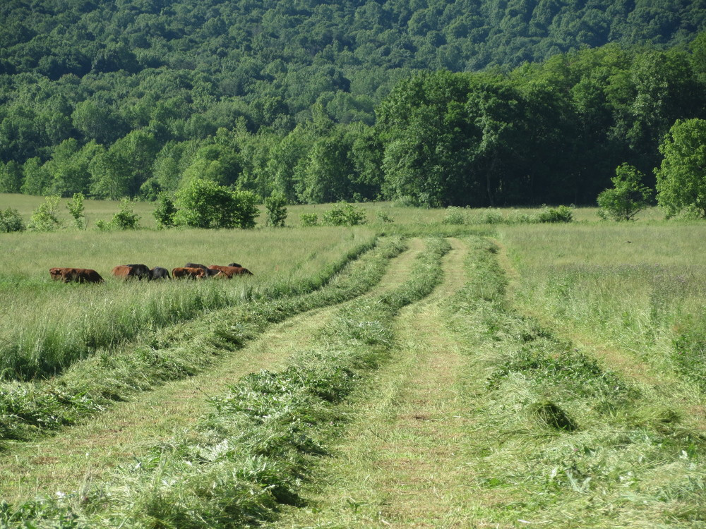 SUN & HAY: MAKING HAY WHILE THE SUN SHINES The evolving method