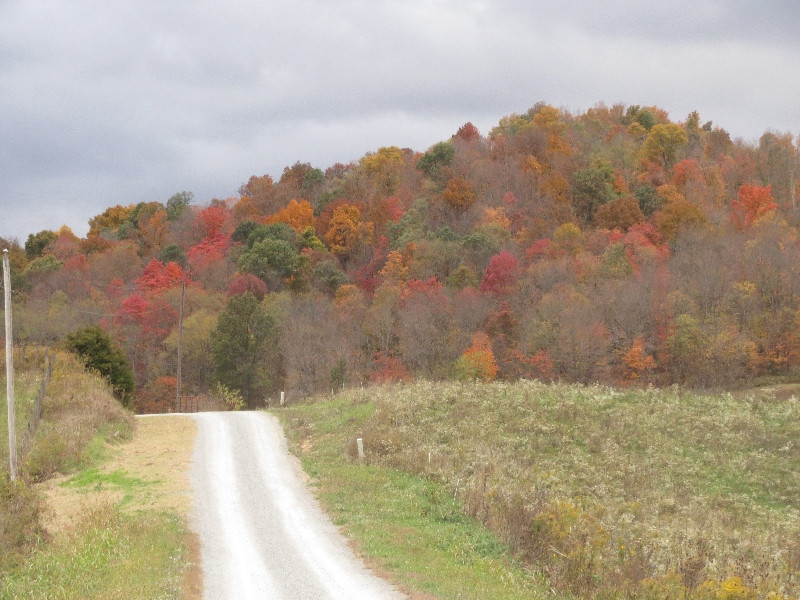 VERMONT IN OHIO: HILLSIDES STUDDED WITH COLOR, bring calving season to Grassroots Farm.