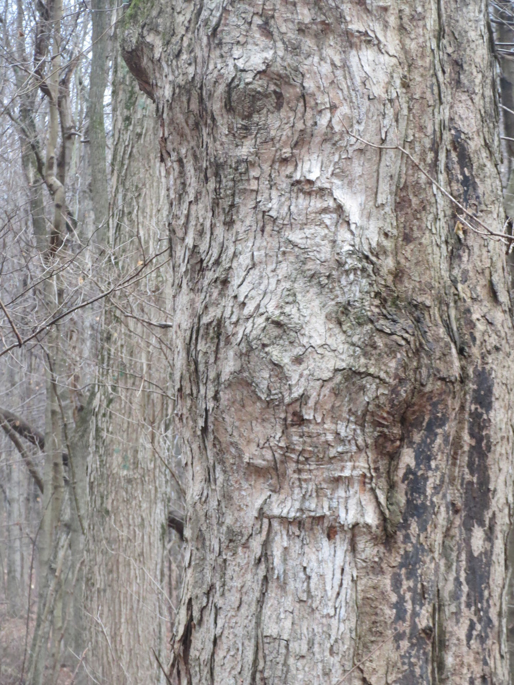 FACE OF GOD: THE FACE OF GOD IS EVERYWHERE, especially in trees.