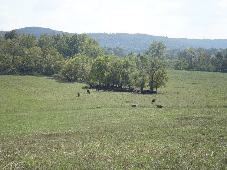 LYRICAL LYRA: OUR COWS AND THESE PASTURES ARE DEPENDENT ON THE SURROUNDING FOREST.