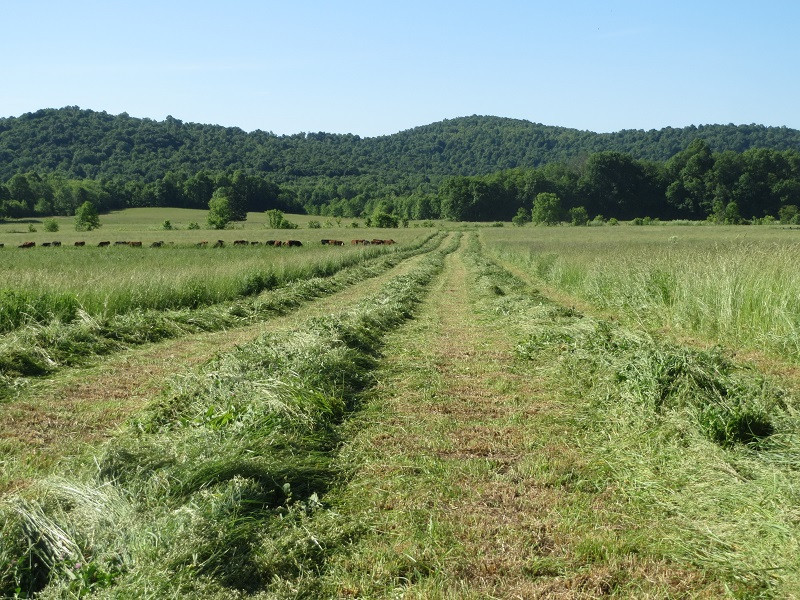Hay Making & Grazing Cows