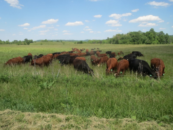 Grassfed Beef Bulk Order - 1 Whole Beef