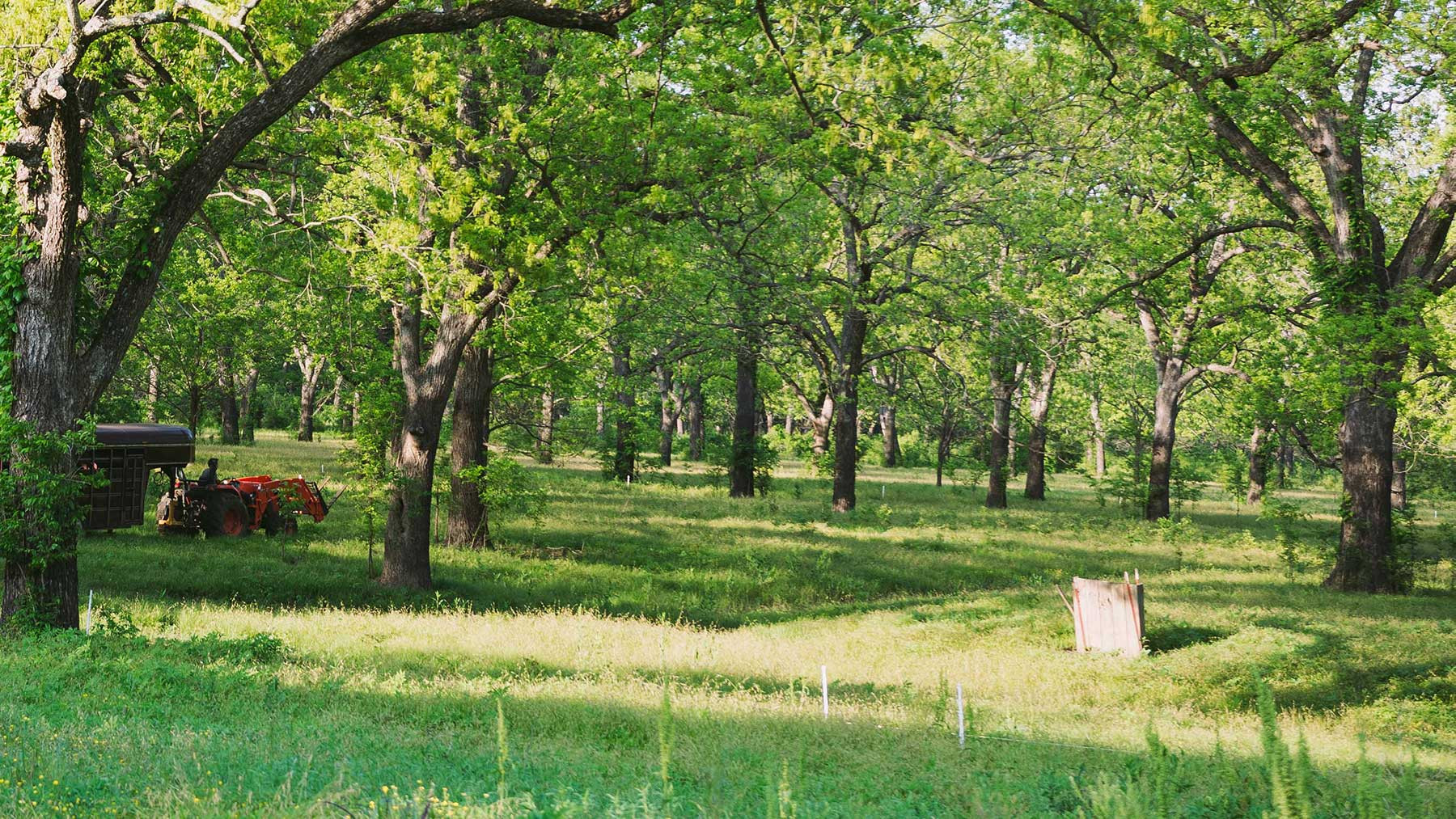 the pecan grove at our sustainable farm