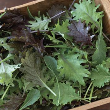 Organic Baby Kale Mix
