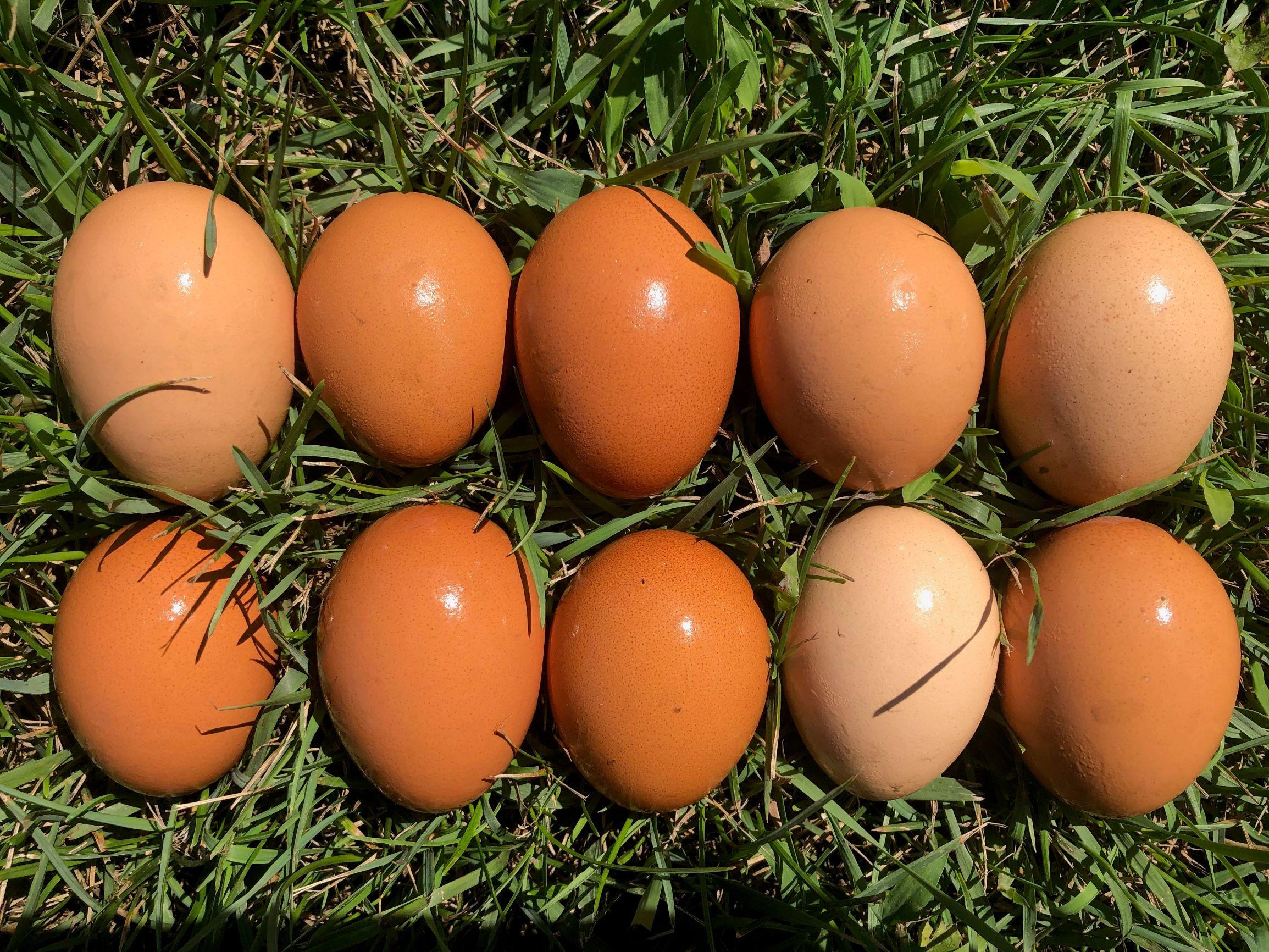 Eggs - Medium Grade A