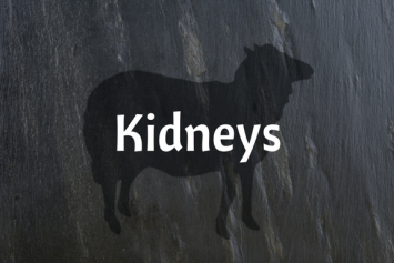 Lamb Kidneys