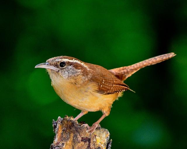 bird-1398379_640.jpg