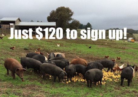 Full Pork Share - $120/month share - Monthly Installments
