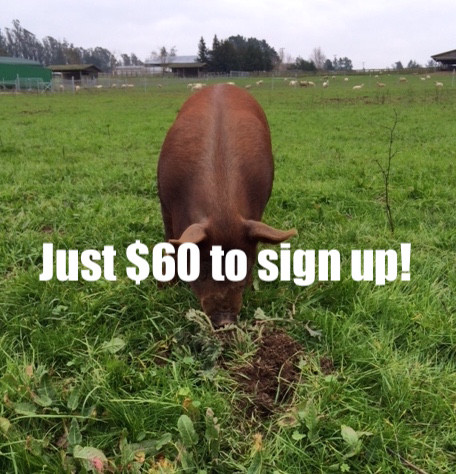 Half Pork Share -$60 per month- Monthly Installments