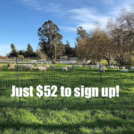 Full Lamb Share -$52/month share-  Monthly Installments