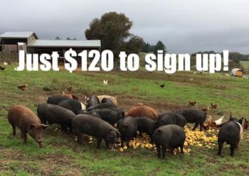 Full Pork Share - $120/month share - Monthly Installments