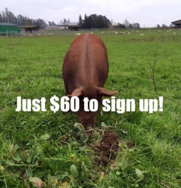 Half Pork Share -$60 per month- Monthly Installments