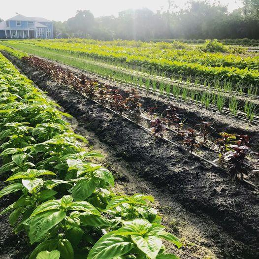 Blumenberry Farm
