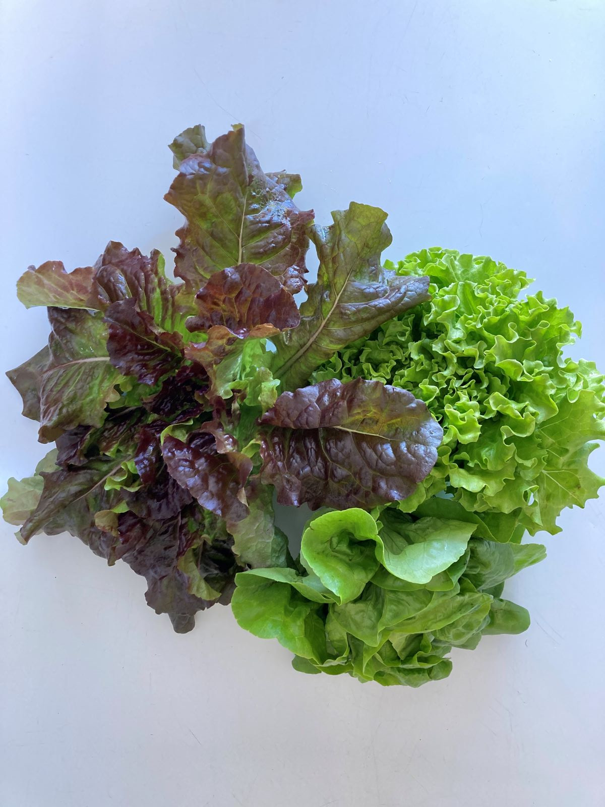 Farmer's Choice Lettuce 3-Pack