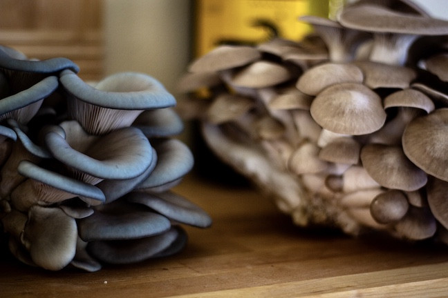 Petrichor Gourmet Mushrooms