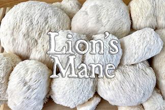 Mushrooms, 1 lb Lion's Mane