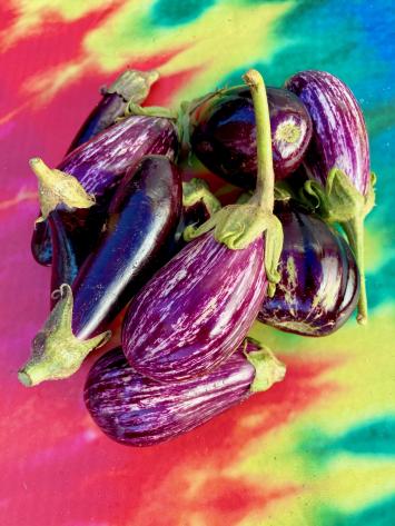 Eggplant, Mixed Purple and Graffitti