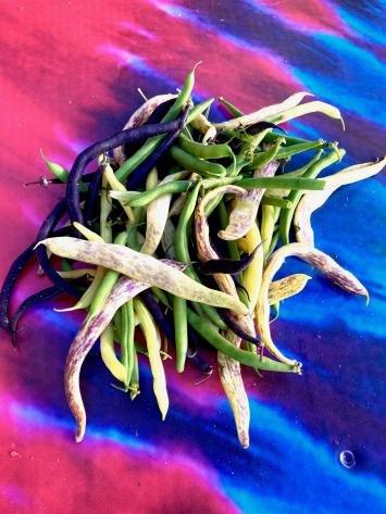 Beans, Heirloom Mixed (Dragon, Green, Yellow, Burgundy)
