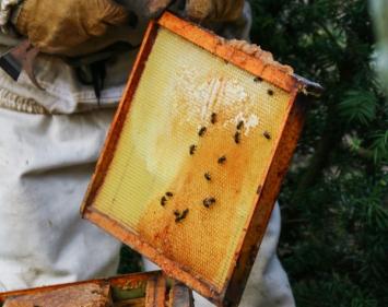 Wild Honey, Small