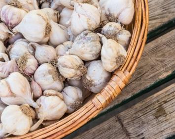 Garlic, Per Pound