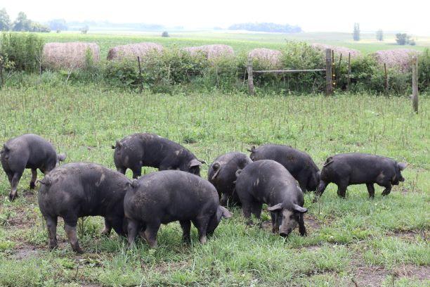 Natural Pork