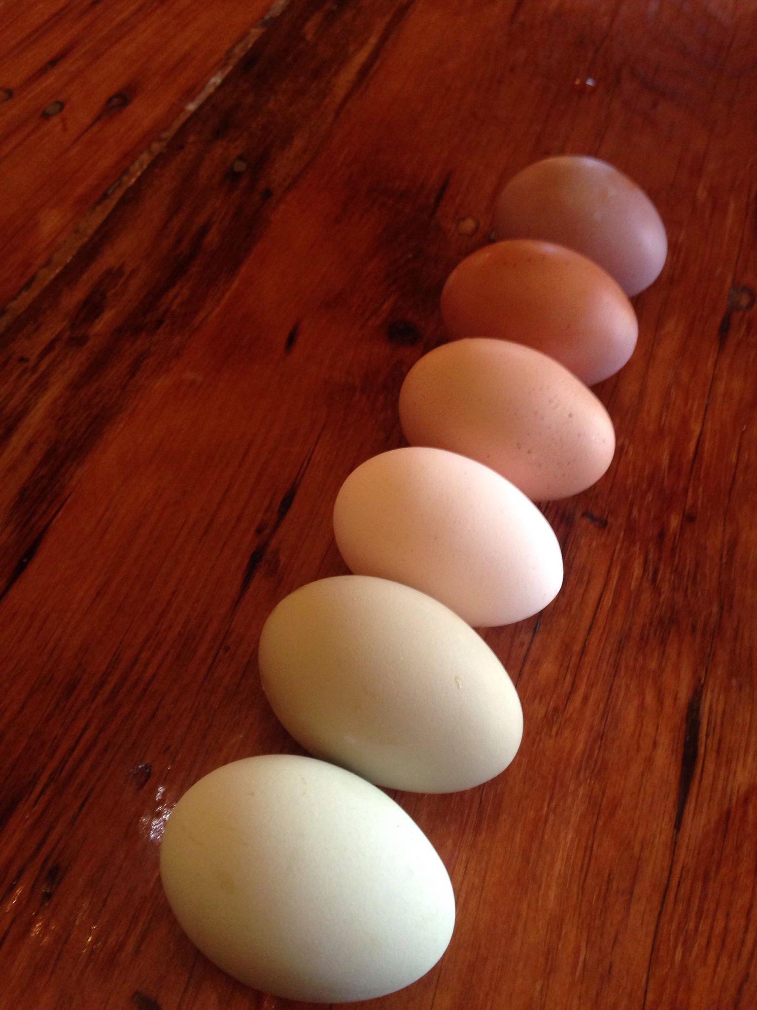 Pastured Eggs - Dozen