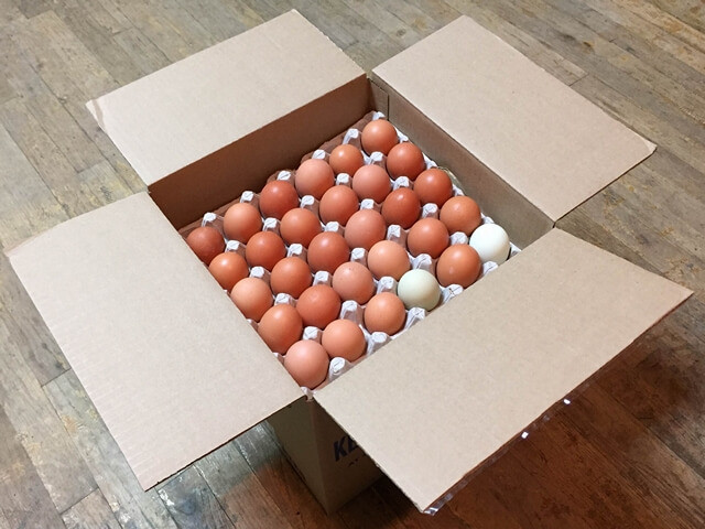Free Range Eggs - BULK Large