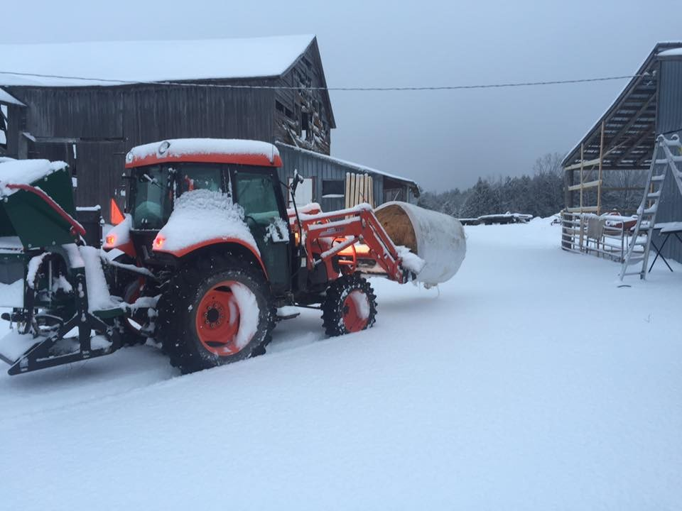 Winter chores, feeding the cows