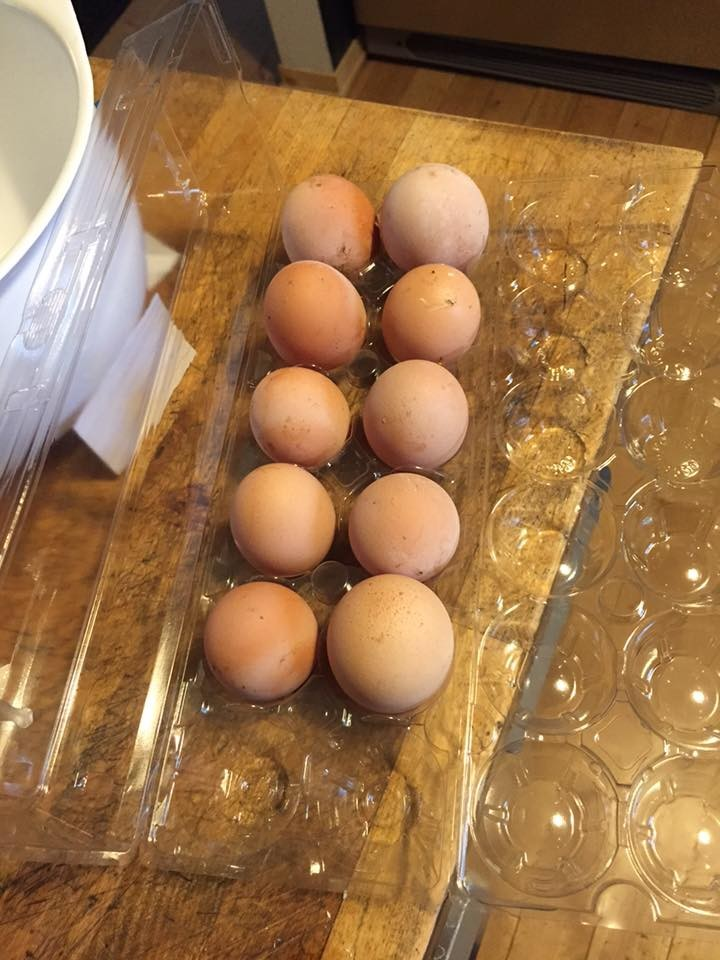 We Have Eggs, May 1, 2017