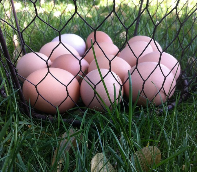 Pasture-Raised Eggs (Non-GMO)