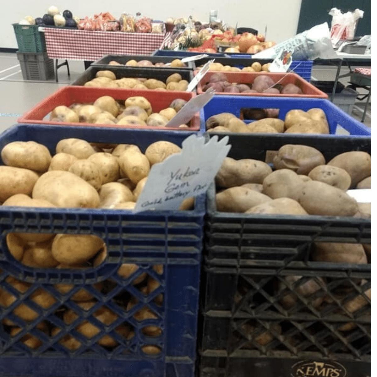 Adirondack Blue Potatoes, 5 lb