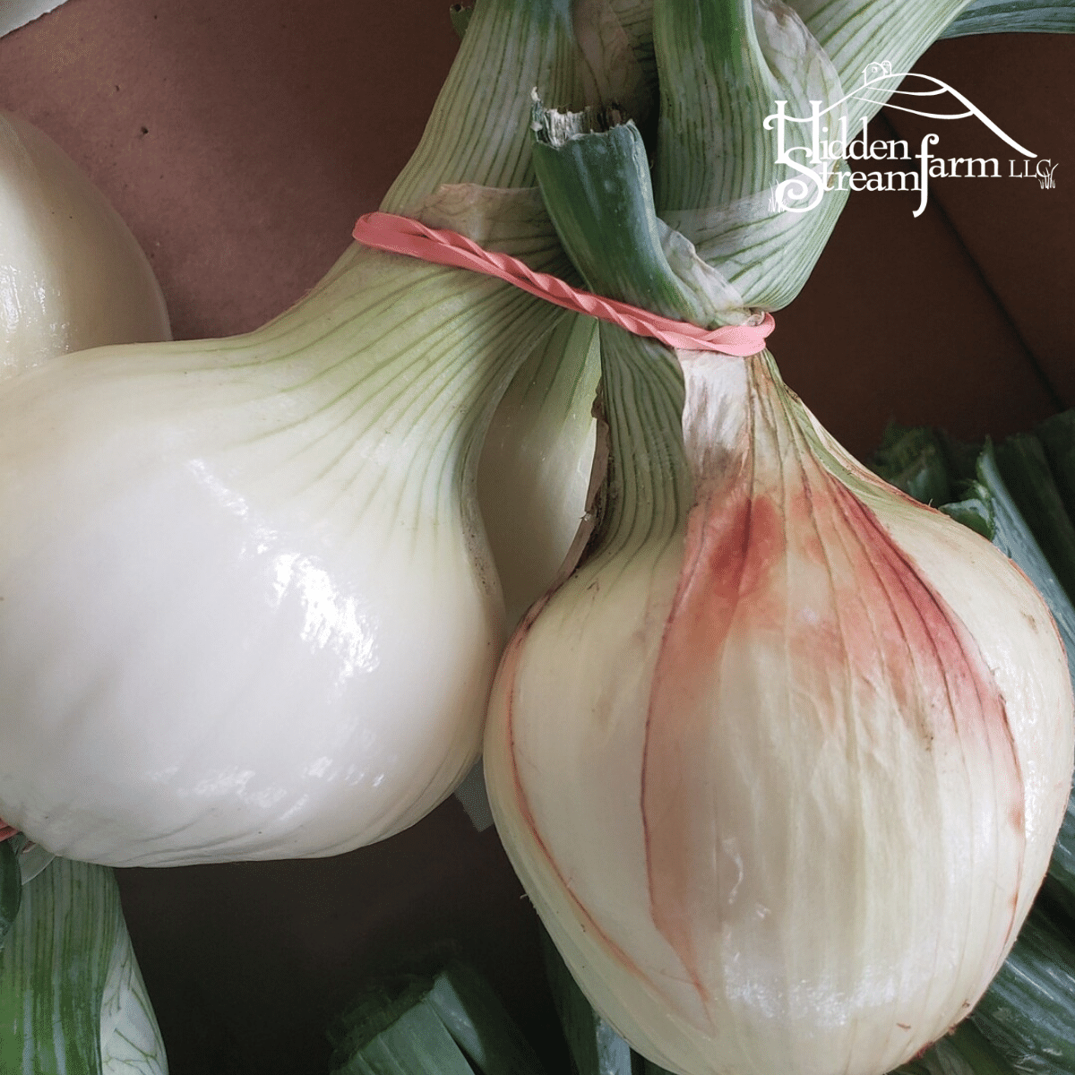 Onions, 2lb
