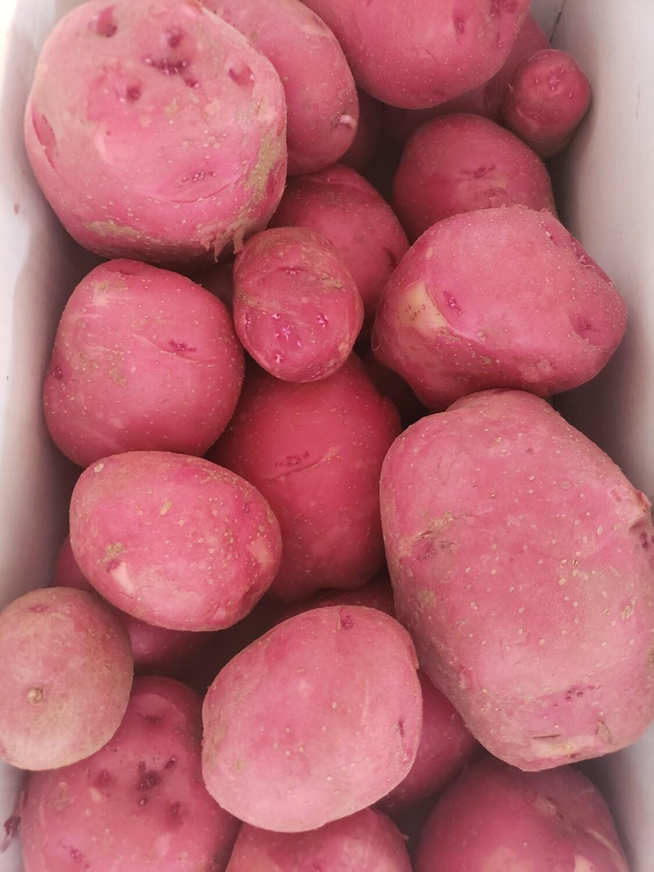 Vegetables, Potatoes, Red - 5 lb