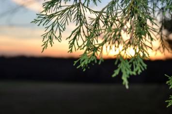 Assorted bulk Greenery (cedar, pine, holly)