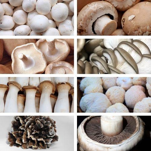 Mixed Mushrooms (All Varieties)
