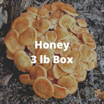Nameko Mushrooms (3 lb box)