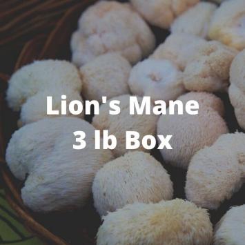 Lion's Mane Mushrooms (3 lb box)