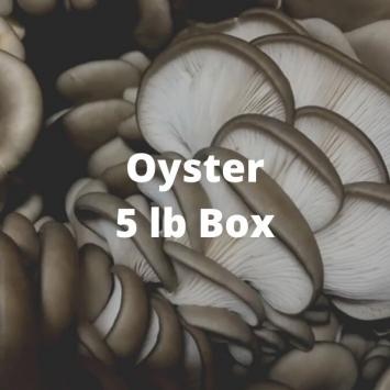 Oyster Mushrooms (5 lb box)