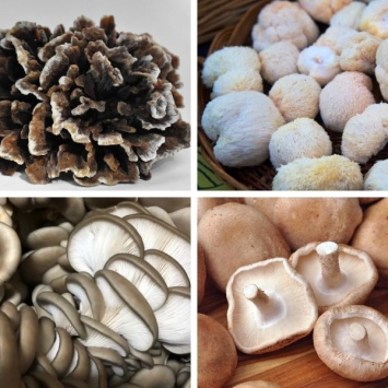 Mixed Mushrooms (Medicinal Varieties)