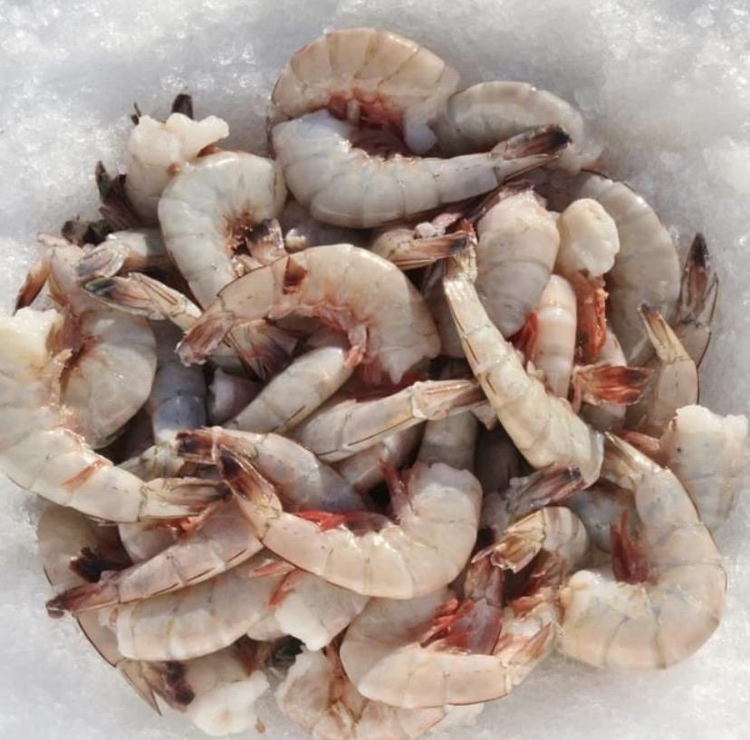 Frozen U/15 Mexican Wild Shrimp