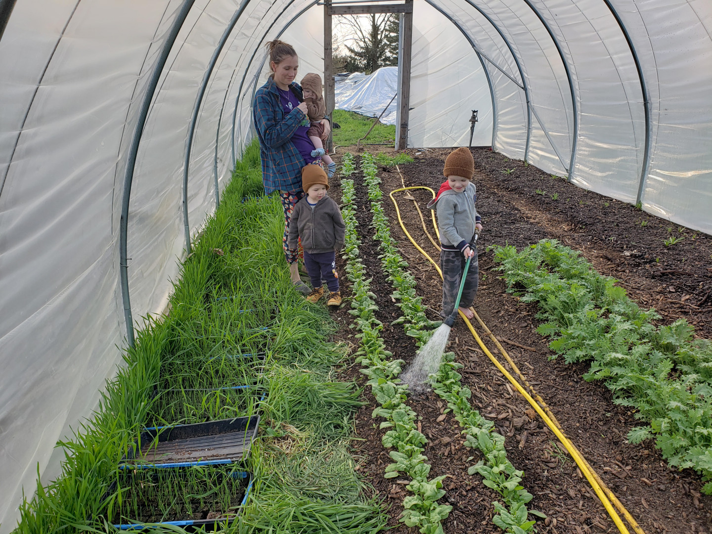 family spinach watering