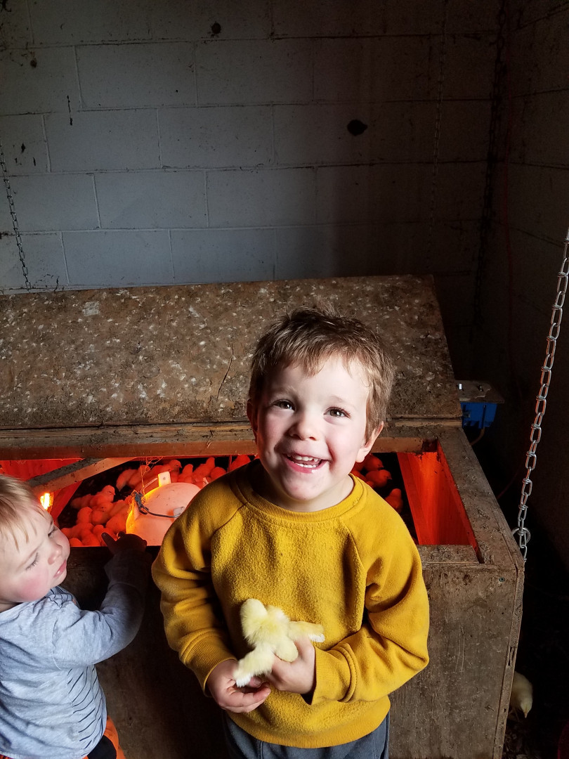 owen and lincoln enjoying the arrival of new baby chicks