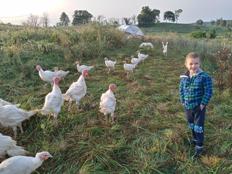 Owen helping with turkey chores