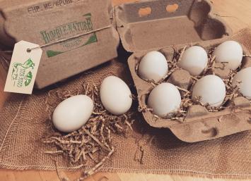 Goose Eggs (Half Doz)- Seasonal from Feb-June