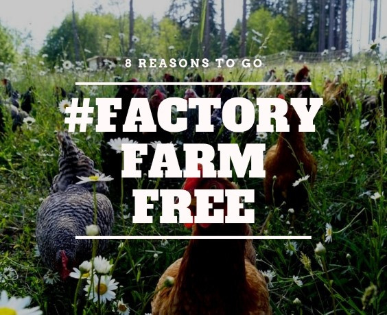8 Reasons to go #FactoryFarmFree
