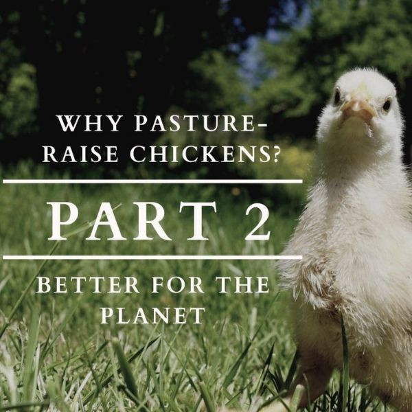 Why Pasture Raise Chickens? Part 2: Better for the Planet