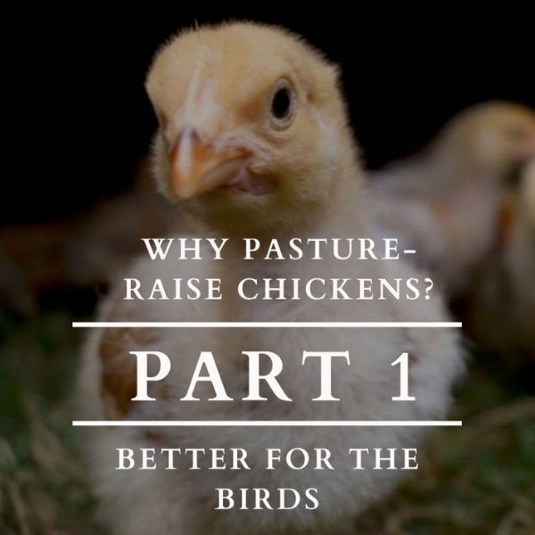Why Pasture Raise Chickens? Part 1: Better for the Birds