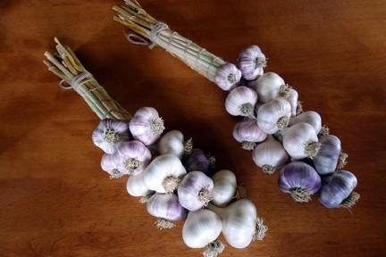 Garlic - Large Tied Hardneck