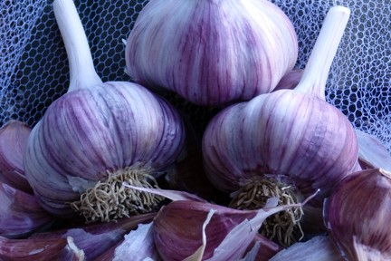 Garlic - Hardneck Culinary Chesnok 1/2 lb.